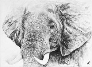 elephant-300x218